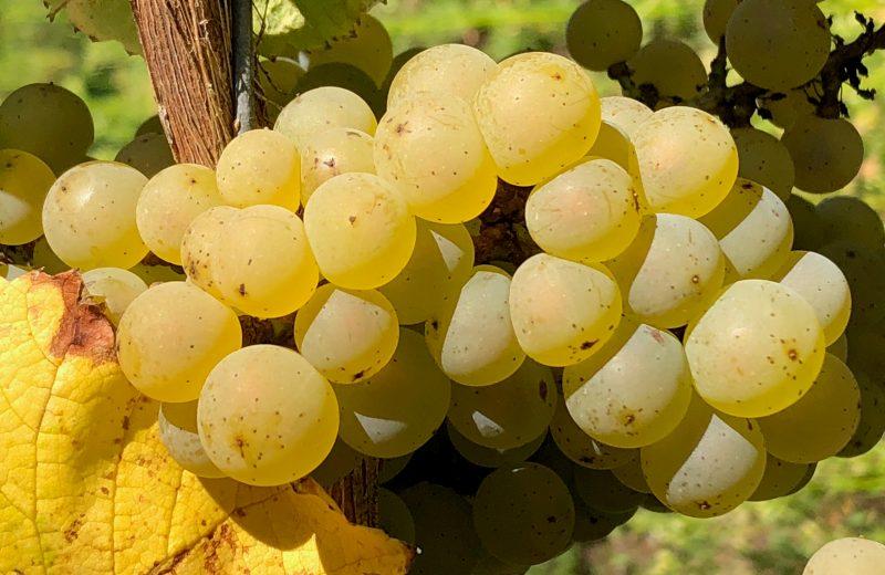 2019-degustation-chateau-cassemichere-lachapelleheulin-44-levignobledenantes