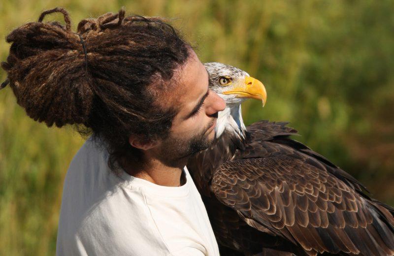 Pygargue à tête blanche et son fauconnier – OSWEGO – Zoo BDD