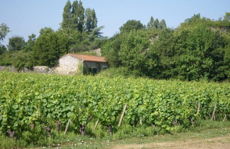 circuit-agrion-chapelle-heulin-levignobledenantes-tourisme [1024×768]