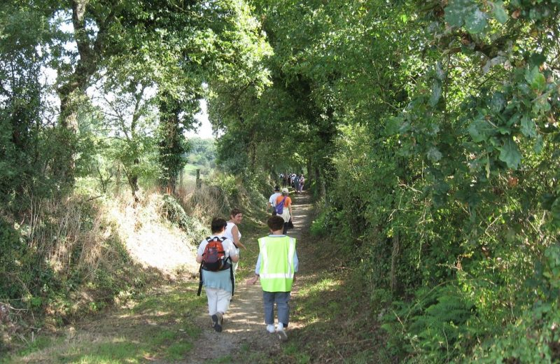circuit-boucle-pedestre-vieux-chemin-royal-getigne-44-ITI  (2)