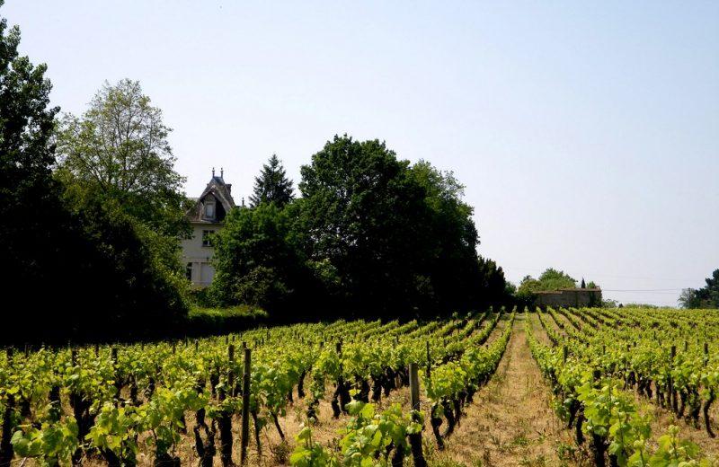 circuit-boucle-pedestre-vigners-en-villages-la-haye-fouassiere-44-ITI  (4)