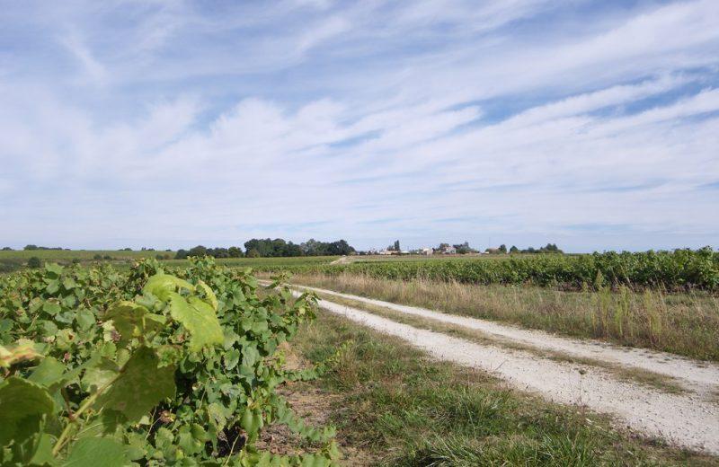 circuit-coteaux-vallet-levignoblenantes-tourisme (4)