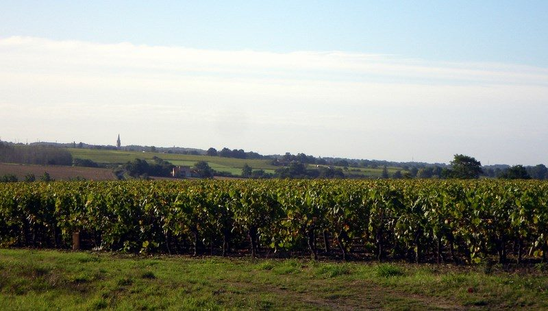 circuit-gabelous-la-regrippiere-levignobledenantes-tourisme(4) [1024×768]