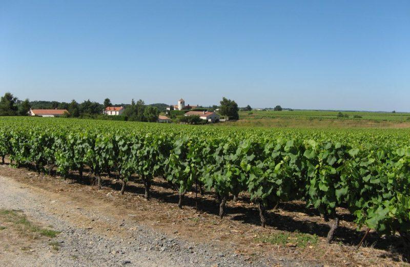 circuit-galloromain-mouzillon-levignobledenantes-tourisme(2)