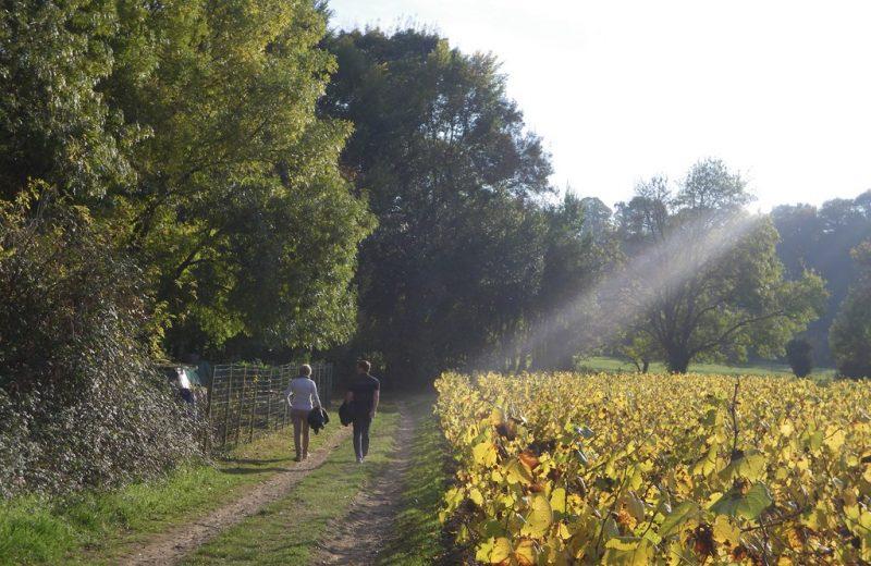 circuit-sevre-lepallet-levignoblenantes-tourisme (2)