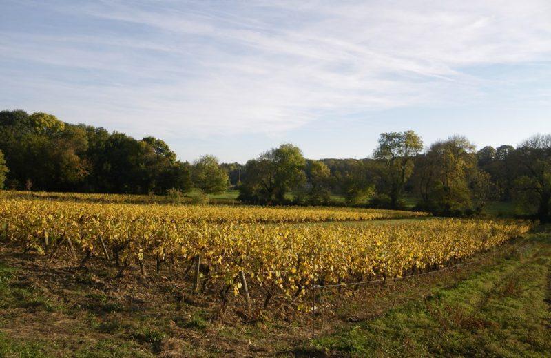 circuit-sevre-lepallet-levignoblenantes-tourisme (4)