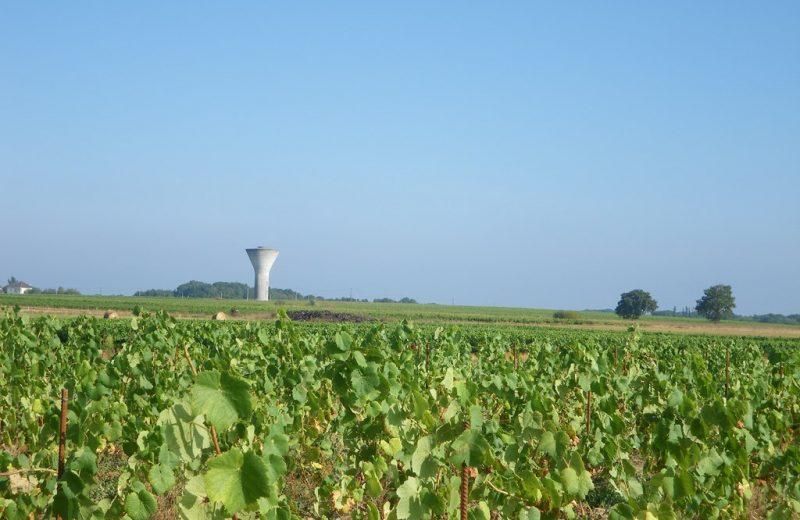 circuit-terres-vignes-st-lumine-clisson-levignoblenantes-touris (9)