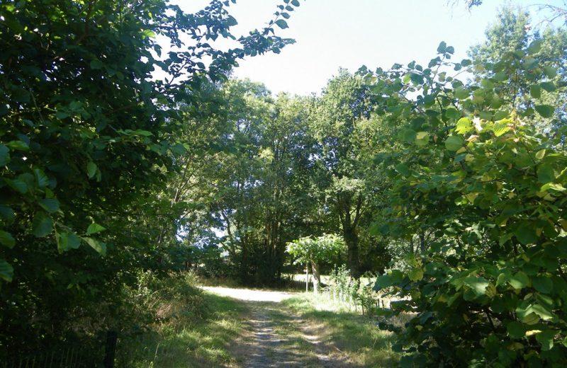 circuit-vignes-mouzillon-levignoblenantes-tourisme (5)