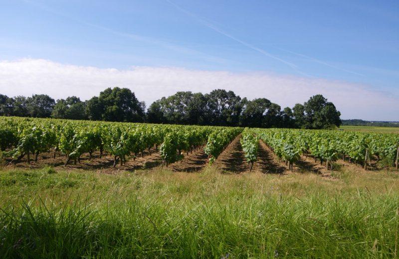 circuit-vignes-mouzillon-levignoblenantes-tourisme (7)