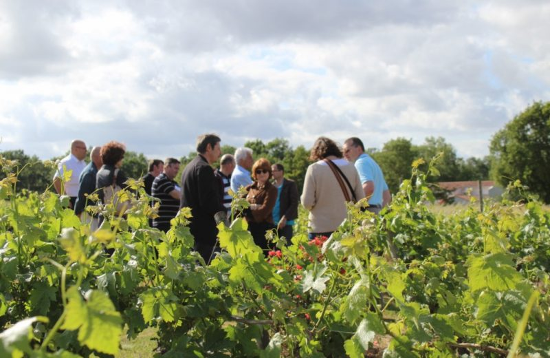 viticulteur-forgesu-mouzillon-44-DEG (6)